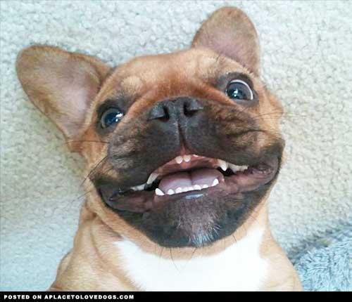 Happy Dog Blogger Meet-up 2015