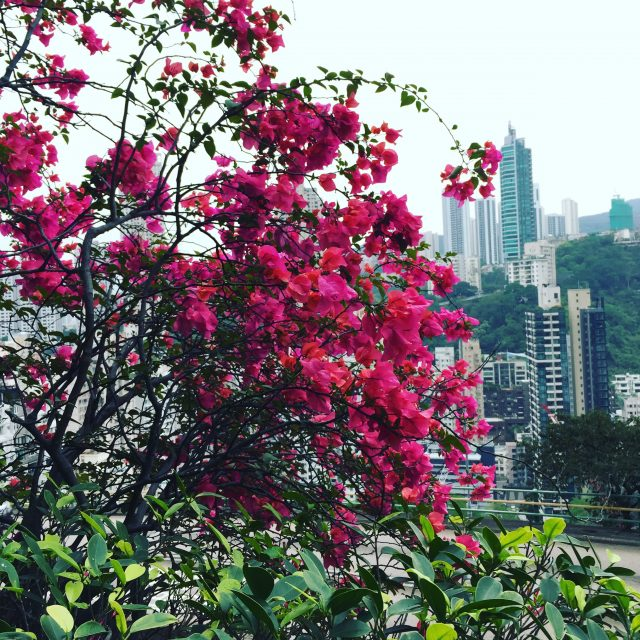 hong kong flowers green walk