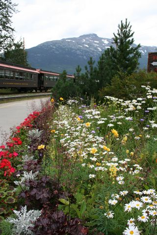 Wild flower and train
